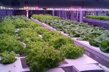[푸드, 테크와 만나다] 서울시, 사물인터넷으로 최적 환경 조성 '식물재배기' 보급
