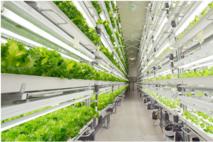 [스마트팜]베트남에 수출용 온실 지능형 농장 조성 추진한다